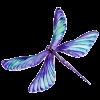 PurplishDragonfly_small