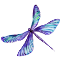 PurplishDragonfly_small