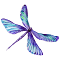 PurplishDragonfly_small right